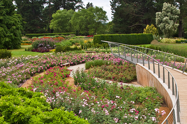 Picture of the rose garden at Savill Garden
